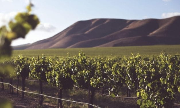5 Ways to Plan the Ultimate Wine Road Trip